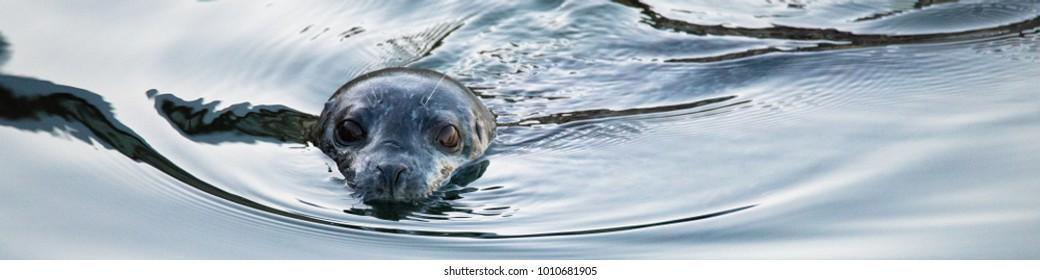 Curious Seal Near Dock