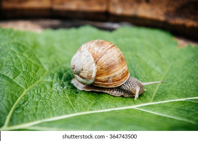 Curious snail in the garden on green leaf