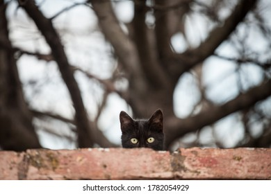 Curious stray black cat, standing at the top of a wall, looking and staring at the camera with its green eyes.