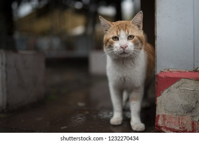 341fc2ae10 curious stray cat - dirty turkish ginger stray cat in antalya