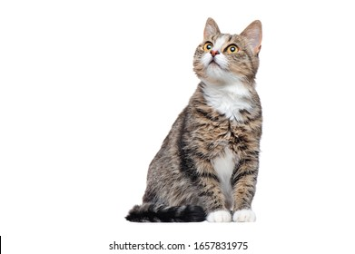Curious tabby cat looking up to the copy space area