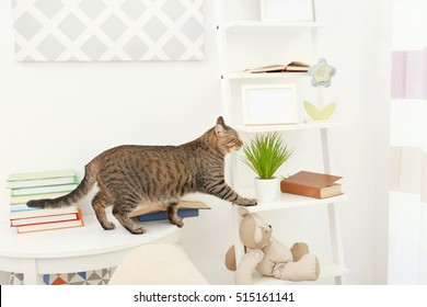 Curious tabby cat reaching stand near white wall