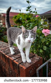 Curious tabby and white cat with green eyes on a brick wall at the gate of a garden