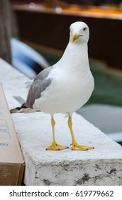 Curious white bird
