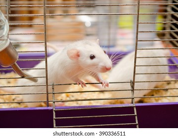 Rat Cage Laboratory Images, Stock Photos & Vectors