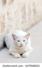 Curious white stray kitten in the street