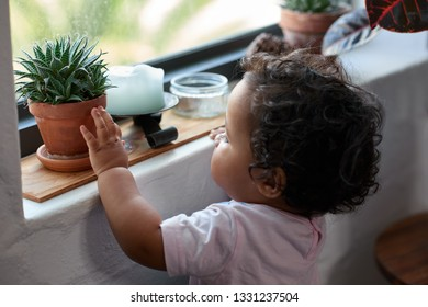 Curious young child touching a pot plant on window sill, inquisitive learning childhood development