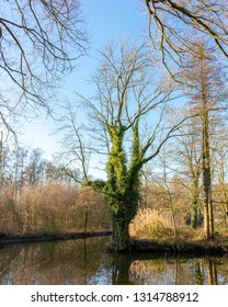 Curious-looking tree at a river fork. Location: Germany, North Rhine-Westphalia, Hoxfeld