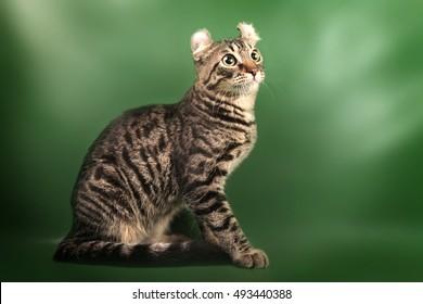 curl cat