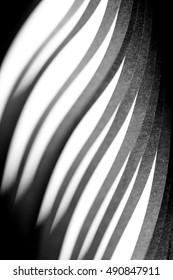 curled in a roll black paper ribbon. Macro lens closeup shot 1:1