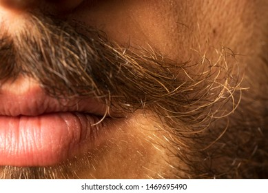 Curled, sexy and messy mustache close up with sexy lips and beard.