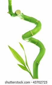 Curly bamboo with leaves growing from the bottom over a white background.