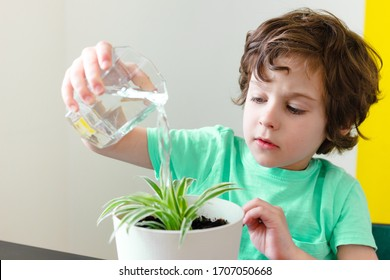 Curly child boy in blue tshirt is smiling and watering houseplant in pot in house