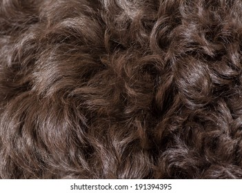 curly dog hair texture