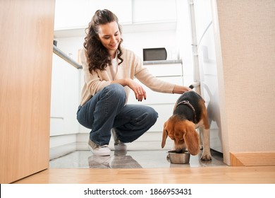 Curly pleasure woman wearing casual clothes stroking a dog approvingly while she eating after being allowed. Pet care concept and lifestyle