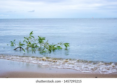 Curonian spit lagoon. Summer landscape