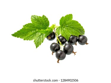 Currant. Black currant with leaf. Heap of fresh black currant fruit. Textured background.
