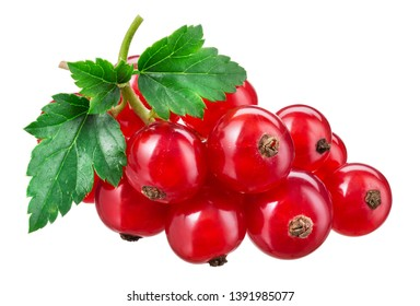 Currant red isolated. Currants on white.