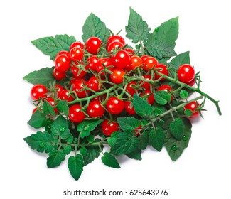 Currant sweet pea tomatoes (Solanum pimpinellifolium) with leaves. Clipping paths, shadow separated, top view