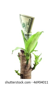 currency  plant with growing dollars isolated on black background