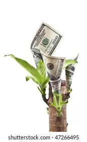 currency plant with growing dollars isolated on white background