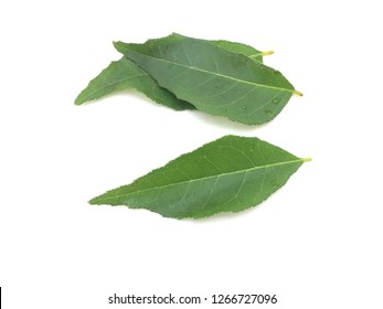 Curry leaves on white background.