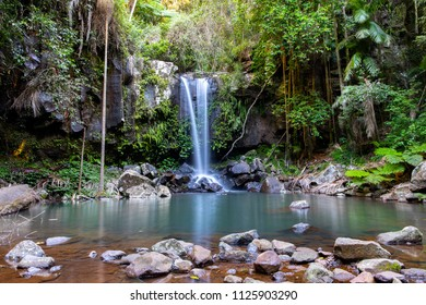 Curtis Falls Waterfall in Tamborine National Park