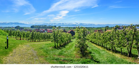 curtural landscape with fruit plantation near Lindau at lake Constance