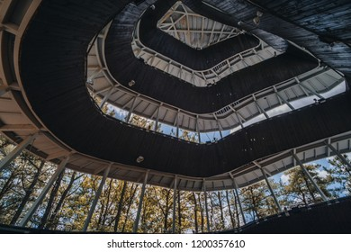 Curve metal roof and stair of observation deck in the forest, the modern design roof with blue big tree and blue sky background. Copy space.