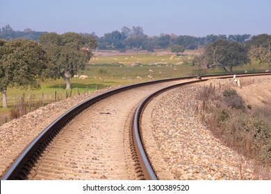 Curve on the railway on modern and new way with the meadow and its sheep in the background