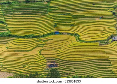 Curve road in the beautiful terraced rice field in Laocai, Vietnam