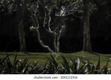 curve of tree in garden