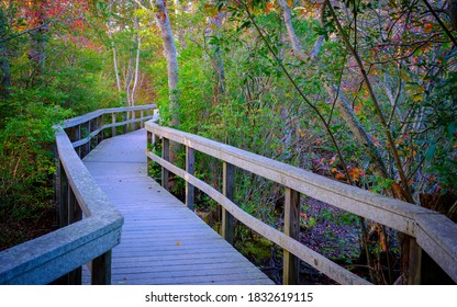 Curved boardwalk at Beach Forest Park in Provincetown in Massachusetts