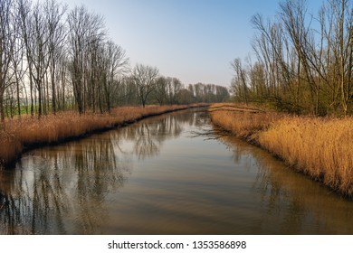 Curved creek with yellow reeds and bare trees reflected in the mirror smooth water surface of a creek in the Dutch National Park Biesbosch, Werkendam, North Brabant. It is a sunny day in springtime.