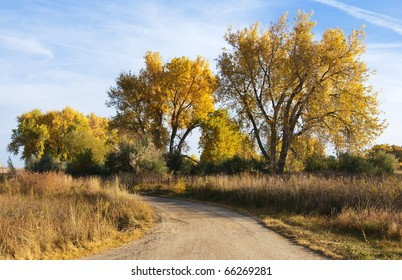Curved dirt road in autumn on the colorado prairie, with majestic yellow-foliaged cottonwood trees.