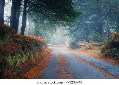 Curved foggy road through rainforest,Madeira Island