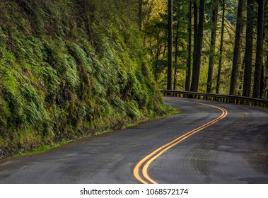 Curved Highway through the Forest