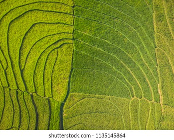 Curved line pattern green terrace rice field tropical countryside in Aerial Photography view; Yogyakarta, Indonesia - 15 July 2018
