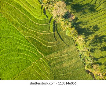 Curved line pattern green terrace rice field in Aerial Photography top view; Yogyakarta, Indonesia - 15 July 2018