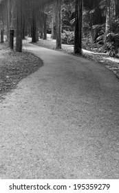 Curved path in a park
