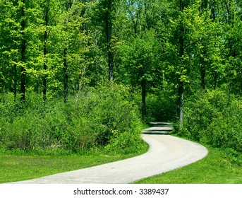 Curved pathway leads deep into the forest