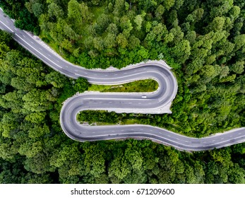 Curved road in the forest