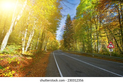 Curved road and forest in autumn