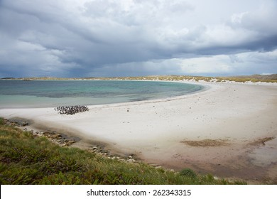Curved sandy beach of Yorke Bay in the Falkland Islands. The bay is home to a colony of Magellanic Penguins (Spheniscus magellanicus) and is close to the Stanley, capital of the Falkland Islands.