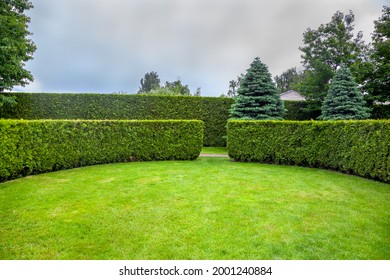 curved thuja hedge in a garden with trees and fir trees and a green lawn spring backyard landscape, nobody.