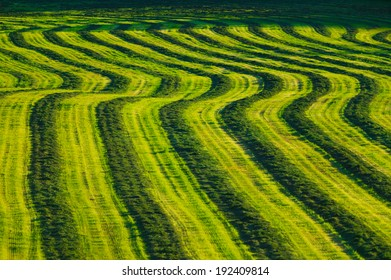 Curving field of harvested crop on farmland in Stowe Vermont, USA