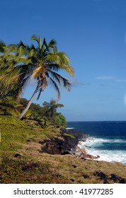 Curving palm tree leans toward the aqua blue waters off the shore of the Big Island of Hawaii.  Windward shore south of McKinzie State Park.