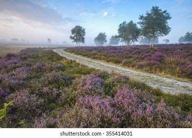 A curving path running through the heather.