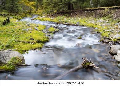 curving stream in forest, beautiful nature landscape