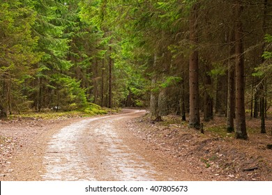 Curvy gravel road through the evergreen pine forest